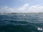LA Open Water Ocean Bootcamp